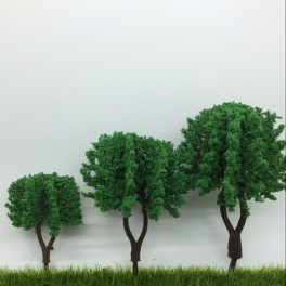Acacia 10cm